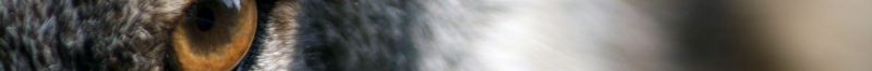 cropped-Untitled-design-1.png